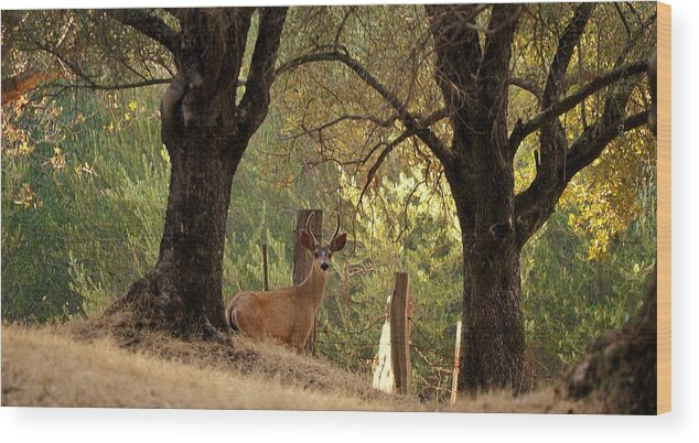 Deer Wood Print featuring the photograph Curious by Rima Biswas