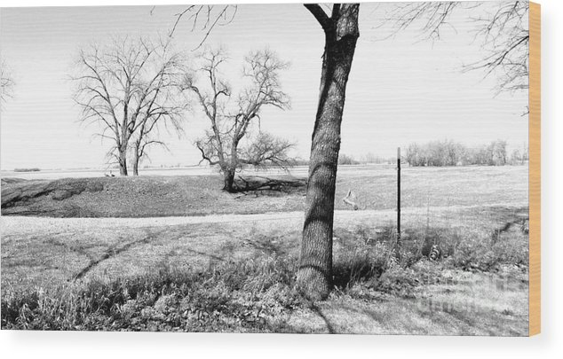 Trees Wood Print featuring the photograph Barren Necessities by Curtis Tilleraas