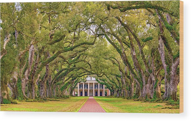 Oak Alley Plantation Wood Print featuring the photograph The Old South Version 3 by Steve Harrington