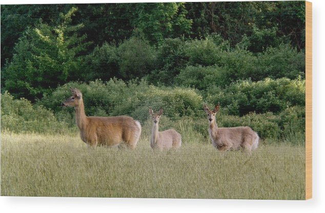 Deer Wood Print featuring the photograph 072506-3 Out For A Walk With The Twins by Mike Davis