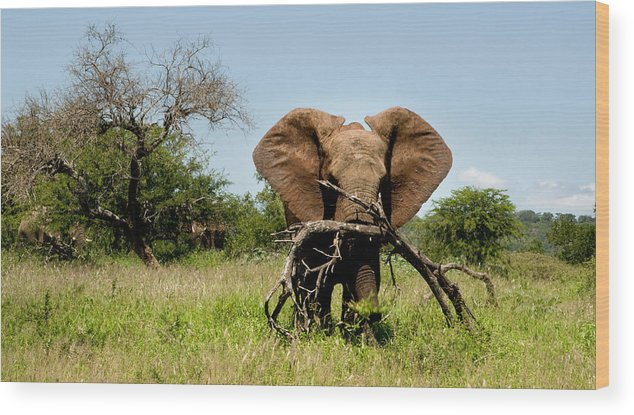 Elephant Wood Print featuring the photograph African Elephant Carying A Tree With Its Trunk by Dray Van Beeck