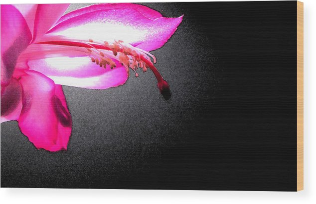 Christmas Cactus Wood Print featuring the photograph Glowing Pink by Mary Bedy