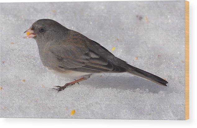 Junco Wood Print featuring the photograph Junco In The Deep Snow by Mary Anne Williams