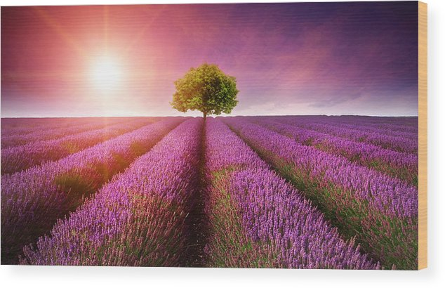 Landscape Wood Print featuring the photograph Lavender Sunrise by Matthew Gibson