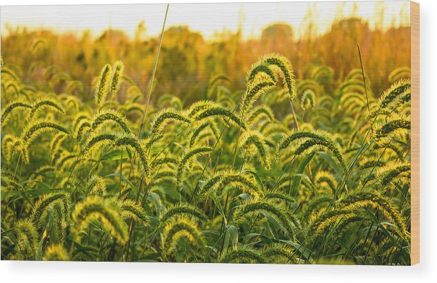 Tall Wood Print featuring the photograph Sunset Grasses by Joseph Mills