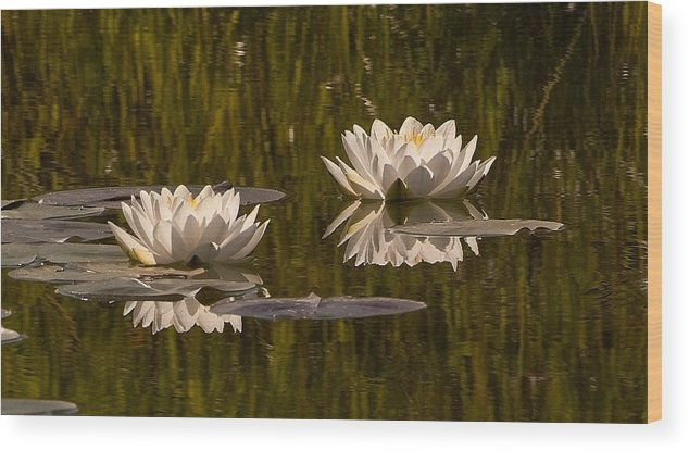 Water Lilies Wood Print featuring the photograph Two by Randolph Fritz