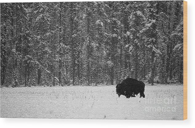Animal Wood Print featuring the photograph Bison In Snow Mosaic by Barry Shaffer