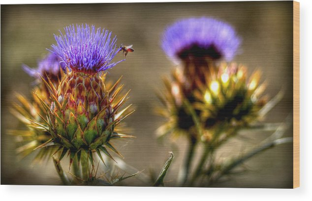 Plant Life Wood Print featuring the photograph Busy Bee by Craig Incardone