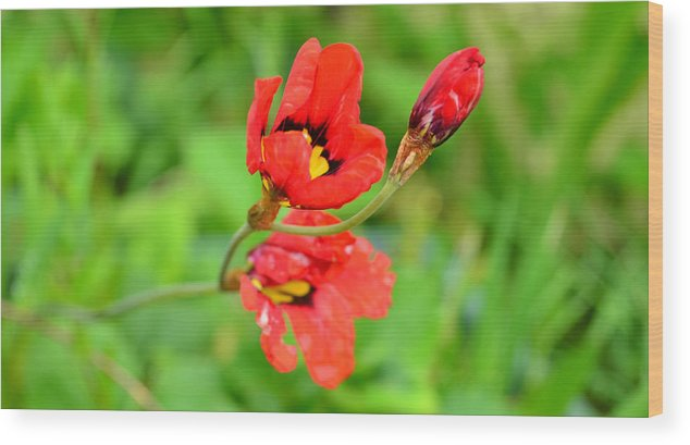 Flower Wood Print featuring the photograph Colour Red by Barbara Walsh