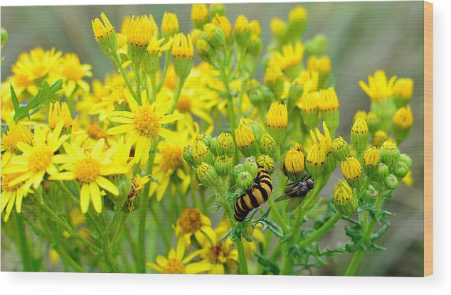 Caterpillar Wood Print featuring the photograph Yellow by Barbara Walsh