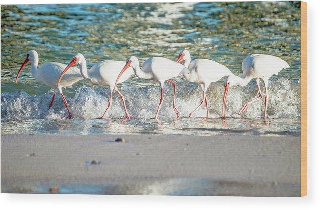 Ibis Wood Print featuring the photograph Companions On Coquina Beach by Teresa Hughes