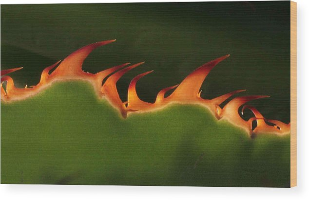 Nature Wood Print featuring the photograph Flaming Aloe by Matt Cormons
