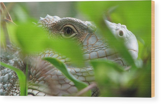 Lizard Wood Print featuring the photograph I See You by April Camenisch