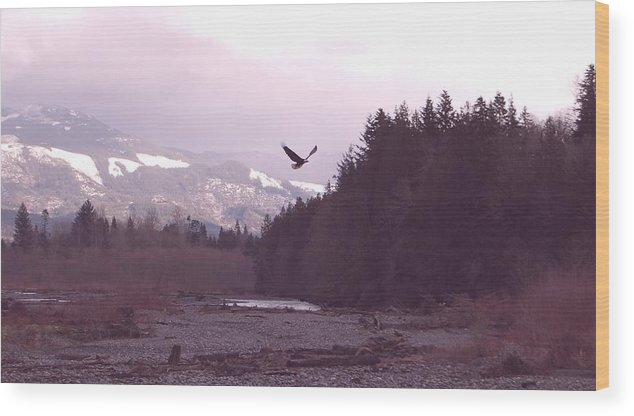 Eagle Wood Print featuring the photograph The Freedom To Fly by J D Banks