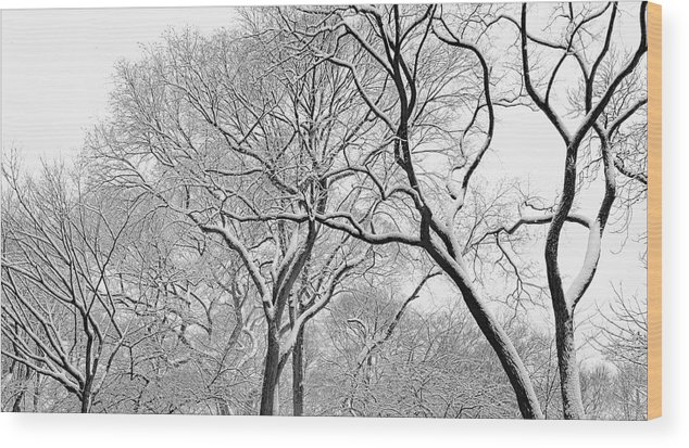 Snow Wood Print featuring the photograph Winter Panorama by Robert Ullmann