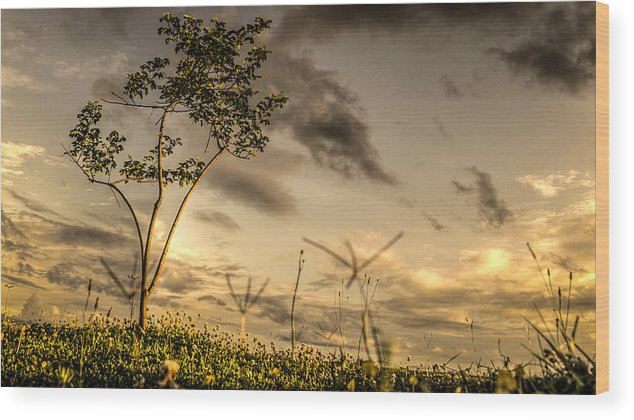 Brasil Wood Print featuring the photograph Landscape by Gallery On Spot