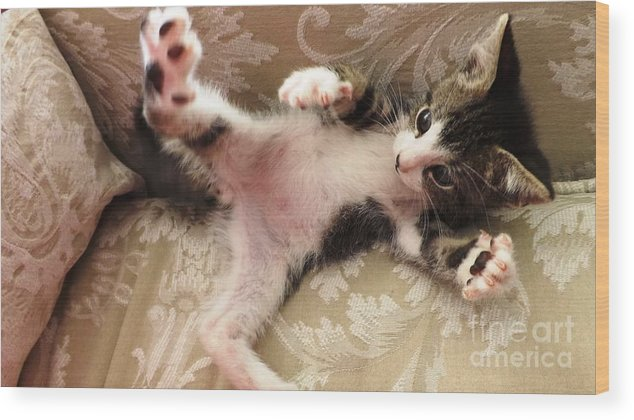 Kitten Wood Print featuring the photograph Christopher Paws Up by Jussta Jussta