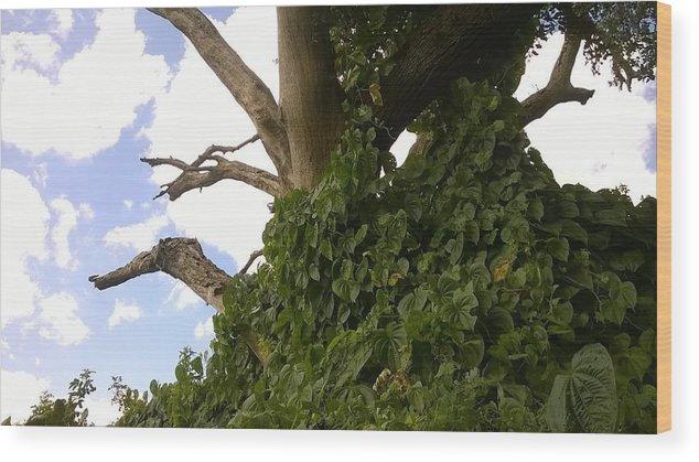 Tree Wood Print featuring the photograph Fairy Tale Tree by Jennifer Michelle Jones