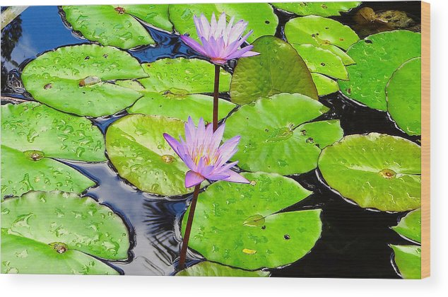 Lily Pad Wood Print featuring the photograph Hawaiian Lily Pads And Flowers_01 by Thomas Neil