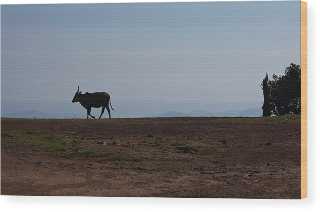 Homecoming Wood Print featuring the photograph Homeward Bound by Saurav Pandey