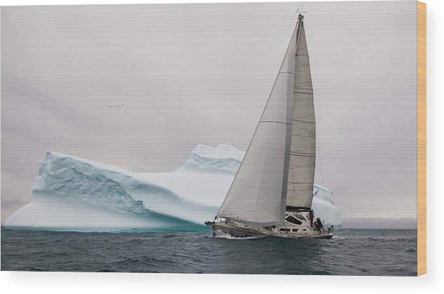 Ice Wood Print featuring the photograph Iced by Simon Delvoye