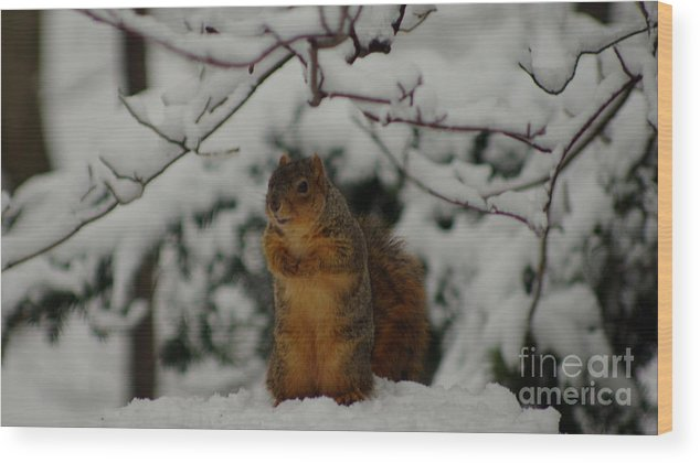 Fox Squirrel In Snow Wood Print featuring the photograph It's Cold Outside by Kitrina Arbuckle