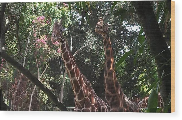 Giraffes Wood Print featuring the photograph Knockin' Around The Zoo by Charity Dees