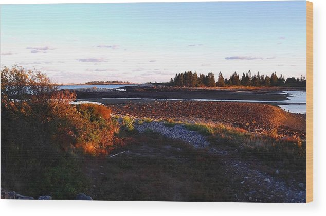 Landscape Wood Print featuring the photograph Low Tide by William Hill