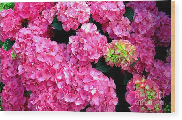 Pink Wood Print featuring the photograph Hot Pink by Jaunine Roberts