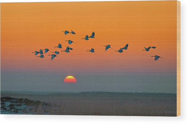 Red-crowned Wood Print featuring the photograph Red-crowned Crane by Hua Zhu