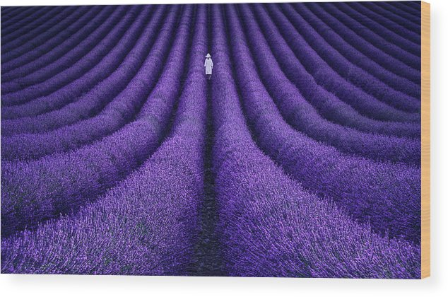 Purple Wood Print featuring the photograph She by Lluis De Haro