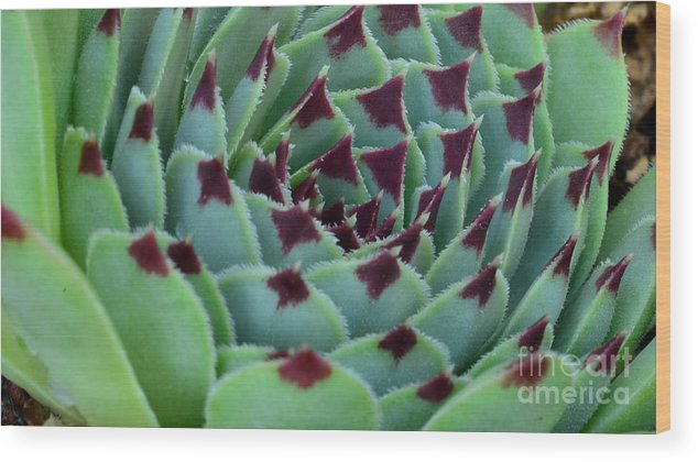 Wood Print featuring the digital art Succulent by Ben Baucum