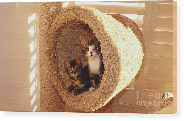 Kittens Wood Print featuring the photograph Two Cats In A Condo by Jussta Jussta