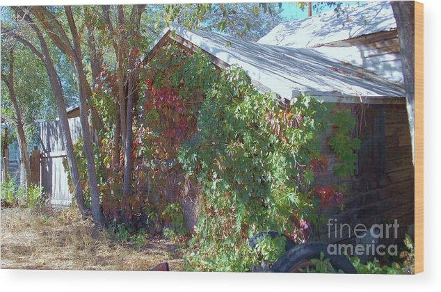 Autumn Leaves Wood Print featuring the photograph Covered Cabin by Vicki Lomay