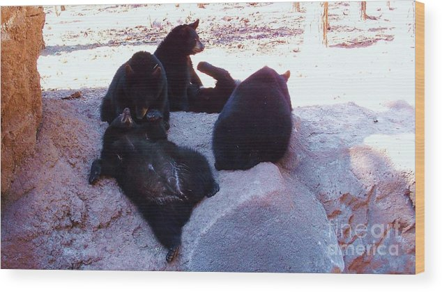 Black Bear Cubs Wood Print featuring the photograph Cozy Cubs by Vicki Lomay