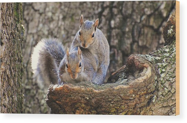 Wildlife Wood Print featuring the photograph Get A Room by John Blanchard