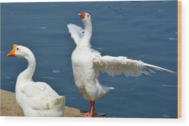 Geese Wood Print featuring the photograph King Of The World by Fraida Gutovich