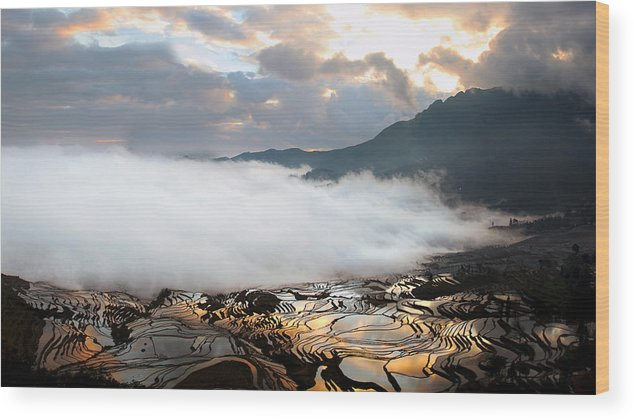 Agriculture Wood Print featuring the photograph Reflection Of Dawn by Barnaby Chambers