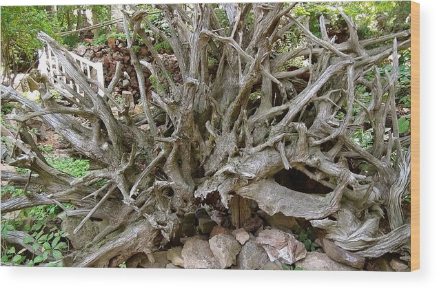 Roots Wood Print featuring the photograph Roots Of Life by Mike Stouffer