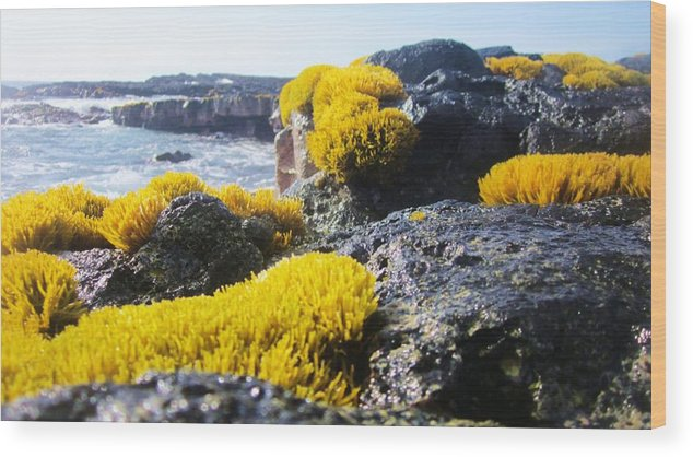 Ocean Wood Print featuring the photograph Sea Weed by Charles Jennison