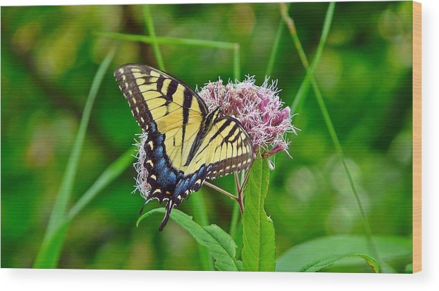 Swallowtail Wood Print featuring the photograph Swallowtail by Robert McCarthy