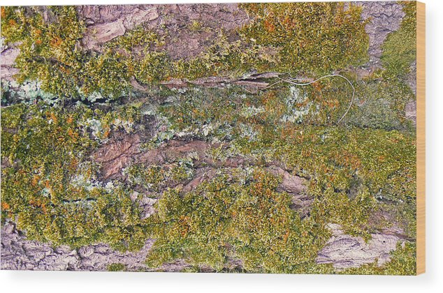 Trees Art Wood Print featuring the photograph Tree Bark Moss by Pamela Patch