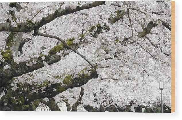 Cherry Wood Print featuring the photograph Blowing In The Wind by Maro Kentros