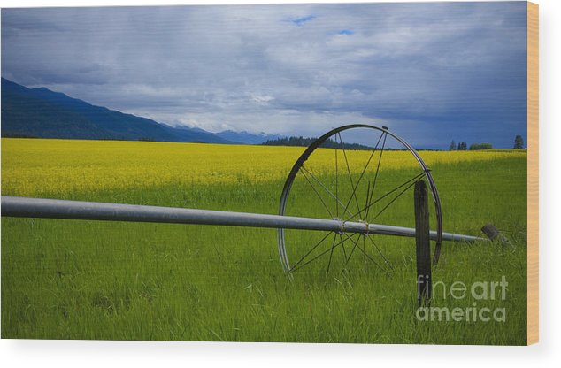 Canola Wood Print featuring the photograph Canola by Idaho Scenic Images Linda Lantzy