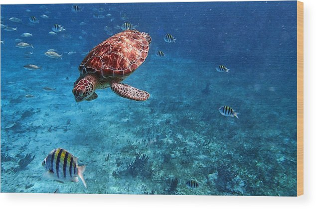 Caribbean Wood Print featuring the photograph Caribbean Blue_13 by Wendy White
