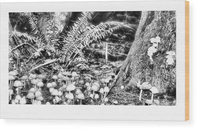 Black Wood Print featuring the photograph Caterpillars Playground 2 by J D Banks