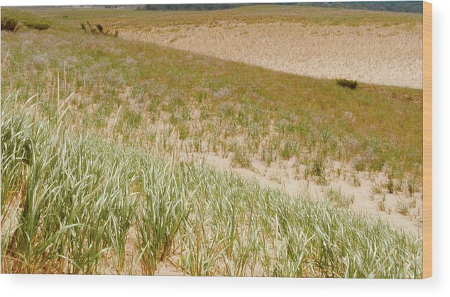 Grass Wood Print featuring the photograph Dune Grass by Keith Kadwell