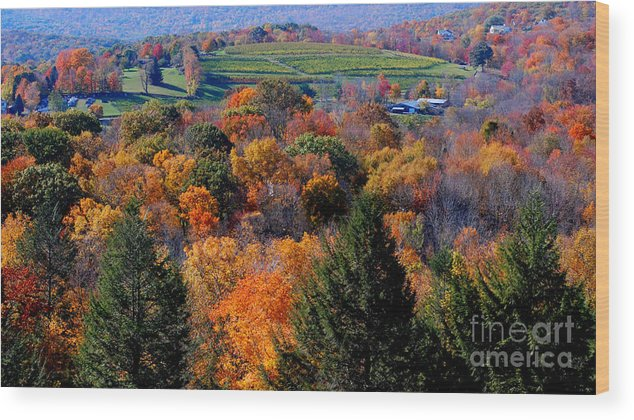 Autumn Wood Print featuring the photograph Fall Profusion by Andrea Simon