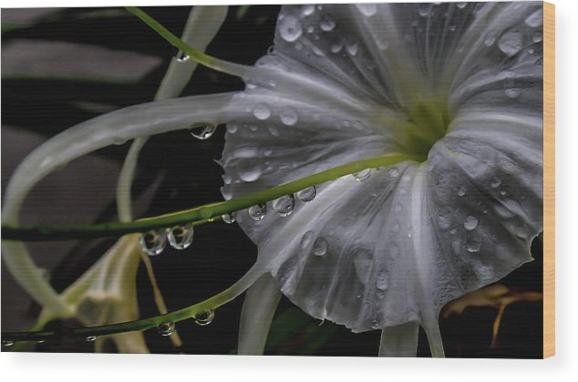 Wood Print featuring the photograph Flower Close Up by Joao Costa