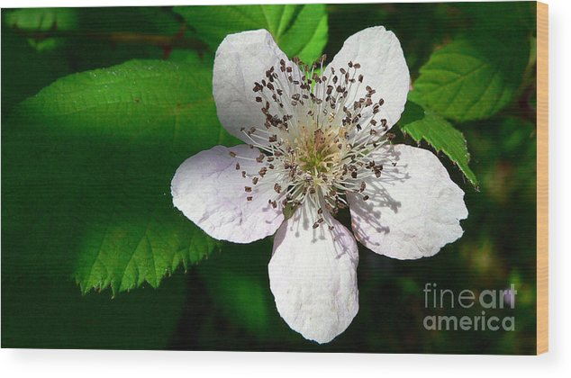 Flower Wood Print featuring the photograph Flower In Shadow by Larry Keahey